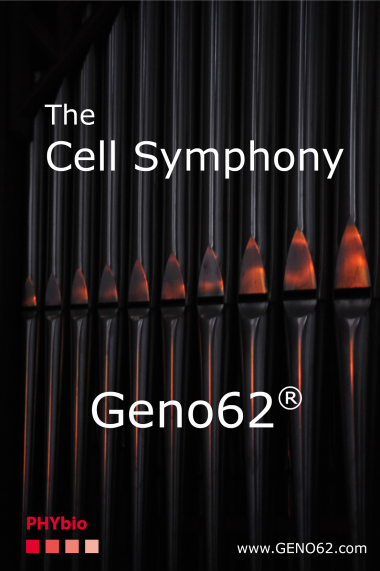 Cell symphonie small